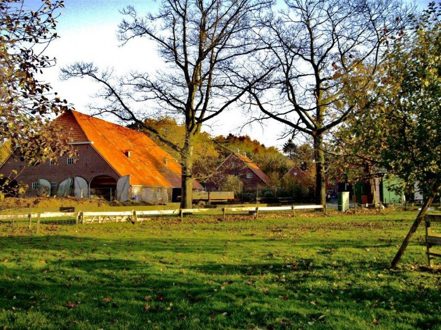 image_bd-zorgboerderij-de-dennenkamp_614